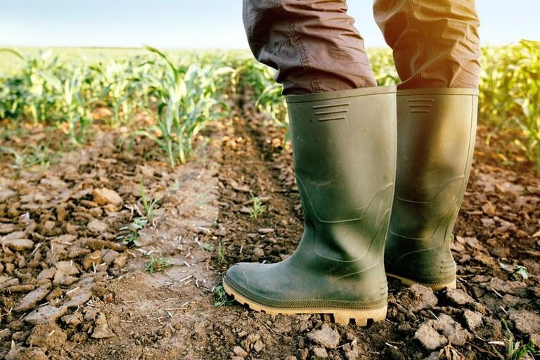 Produtores rurais receberam R$ 341 milhões em indenizações pagas por seguradoras em 2019